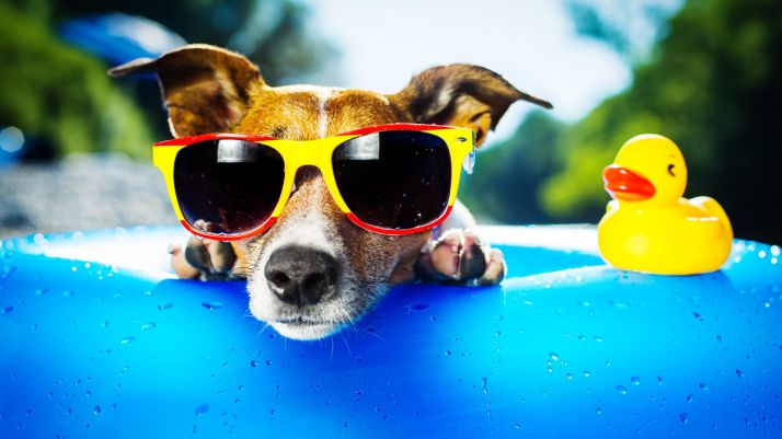 3037396-poster-p-1-the-best-vacation-homes-for-dogs
