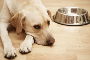 dog-empty-bowl-350-300x200
