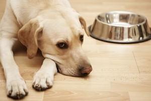 dog-empty-bowl-350-300x200