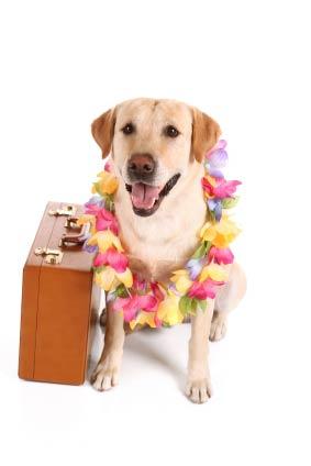 vacation-dog-lrg